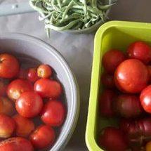 Les tomates et ta vie…